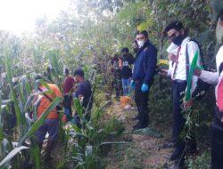 Pagi-pagi Warga Utan Digegerkan Dengan Penemuan Mayat Seorang Nenek di Kebun Jagung